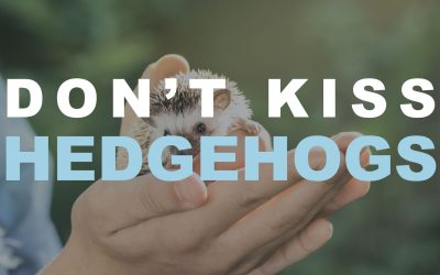 Don't Kiss Hedgehogs